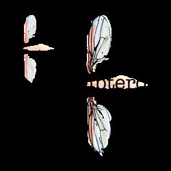 Dipteros_1