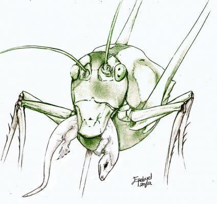 grasshopper_by_erebyel-d5ndqzy