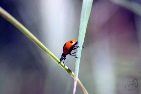 mariquita__ladybug__by_erebyel-d8tqoaz